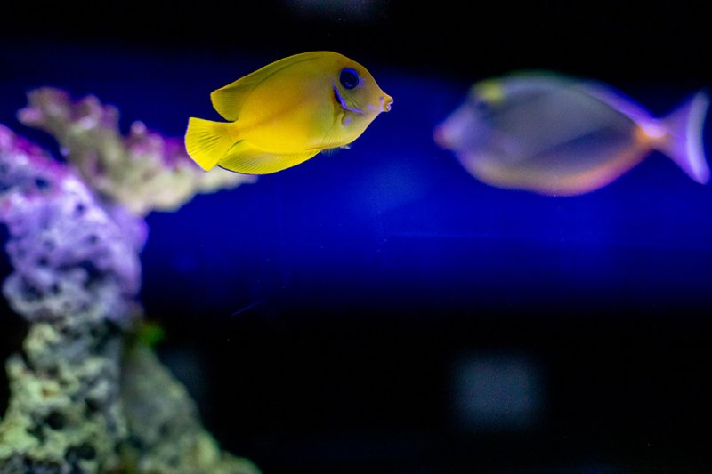 Fish City Aquarium
